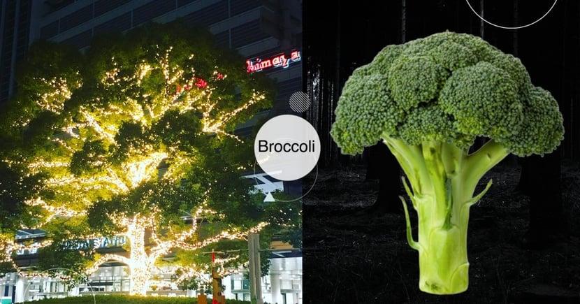 超巨大花椰菜!日本名古屋車站地標「會發光的花椰菜」引熱議:讓人想吃火鍋的療癒畫面無誤