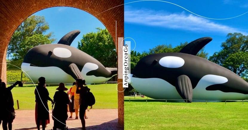 「安平虎鯨嘉年華」20公尺巨大虎鯨在台南!燈光煙火表演、餵食秀7/15登場~