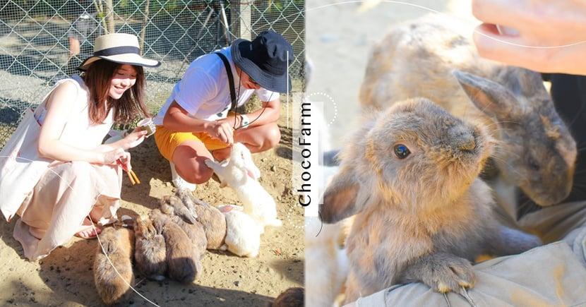 連假讓兔兔療癒你!來墾丁「阿信巧克力農場」體驗被小鹿 x 兔兔包圍的幸福感吧