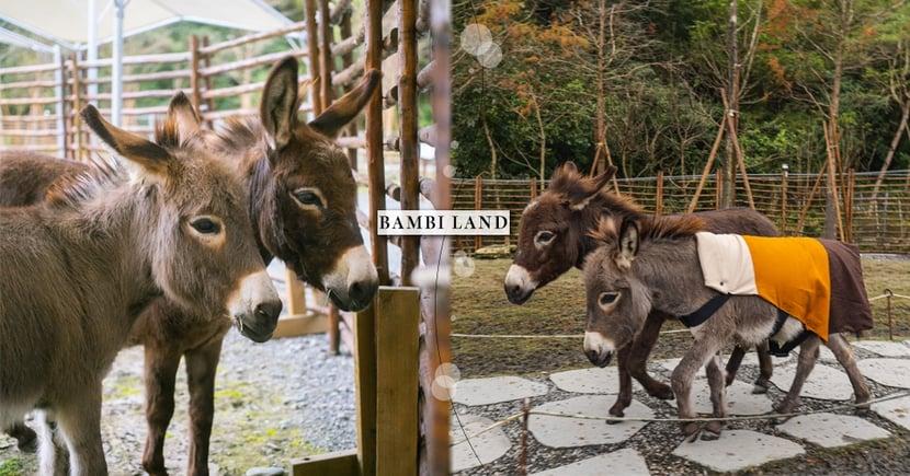 宜蘭斑比山丘有新朋友啦!超萌「迷你驢」娜娜 x 妮妮登場~假期快來和牠們相見歡